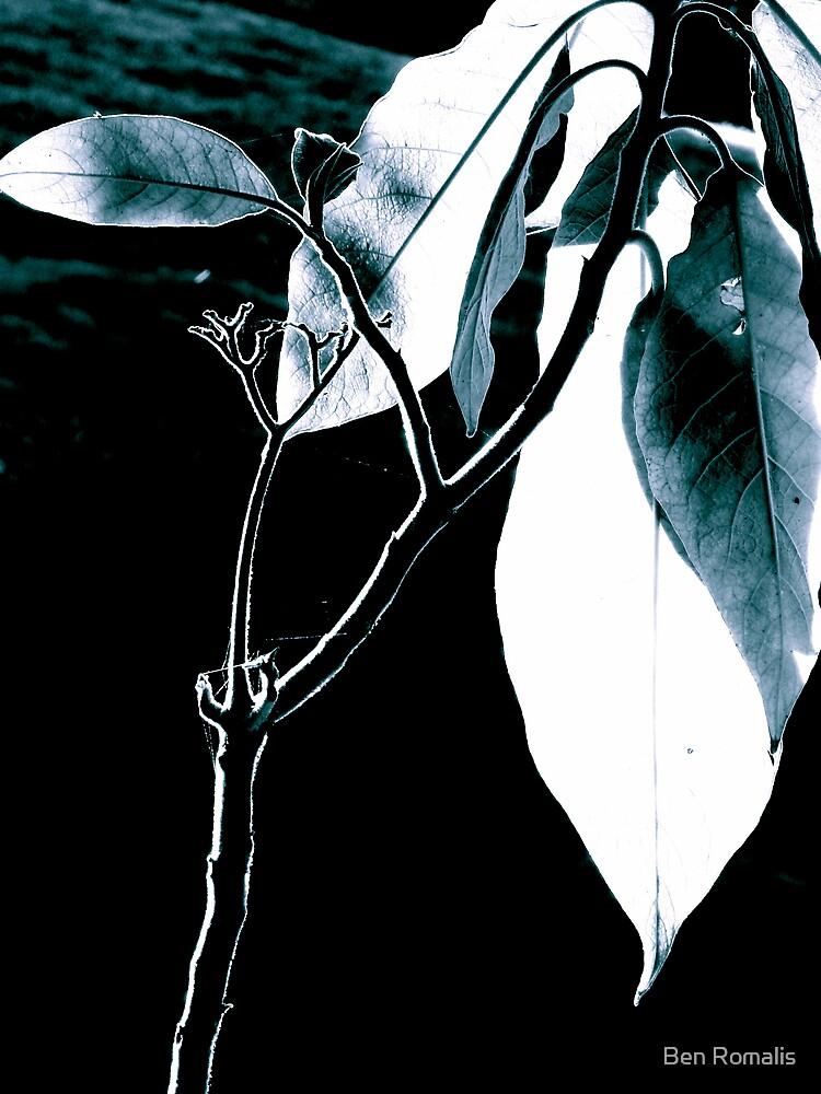 Garden Ghost by Ben Romalis