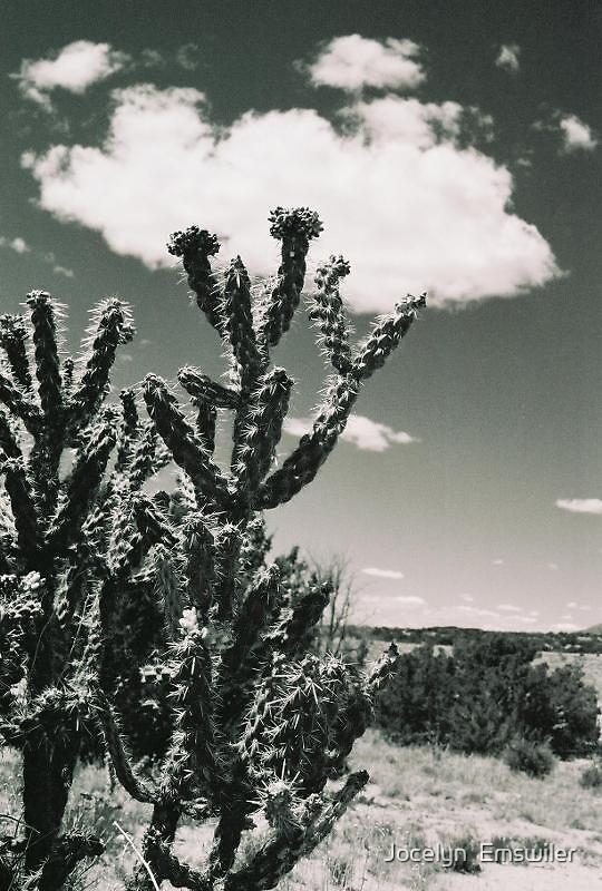 Cactus by Jocelyn  Emswiler