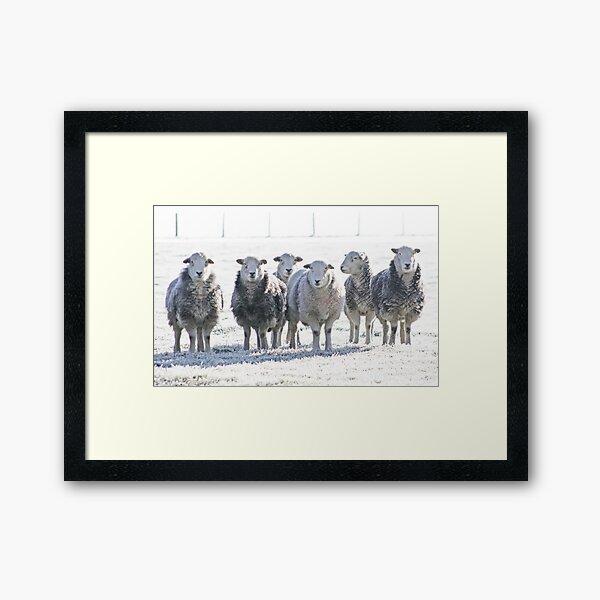 Herdwick Sheep Framed Art Print
