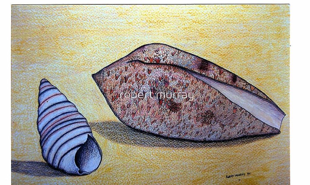 seashells by robert murray