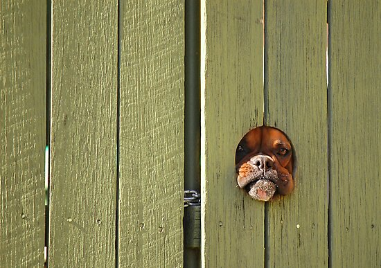 """""""Don't Make Me Come Out There!"""" by Evan Schoo"""
