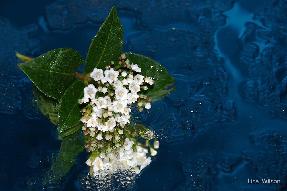 Floating Flowers by Lisa  Wilson
