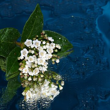 Floating Flowers by Lisa1969