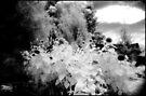 sunflowers 2 by Juilee  Pryor