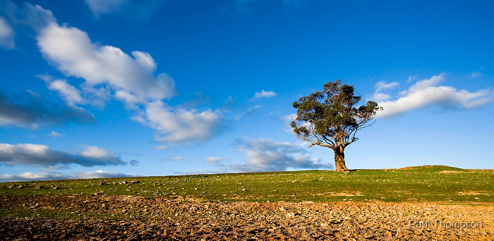 One Tree by Paul Thompson
