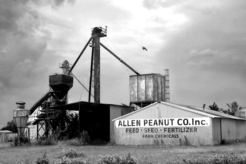 Allen Peanuts by Che Graves