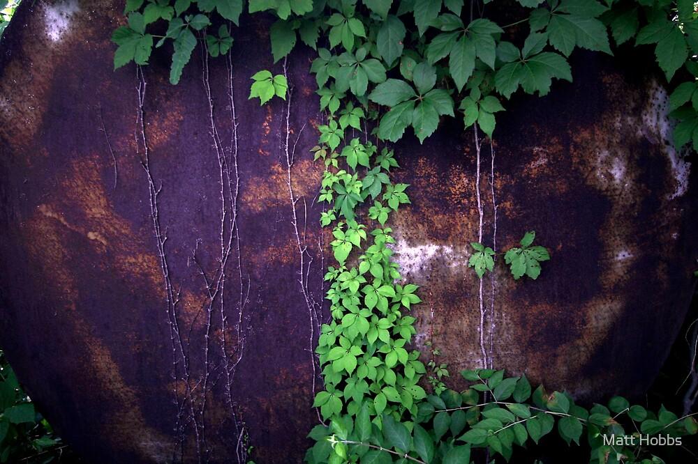 Hidden Tree by Matt Hobbs