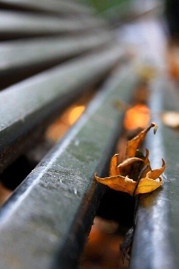A leaf on a bench by Julien Tordjman