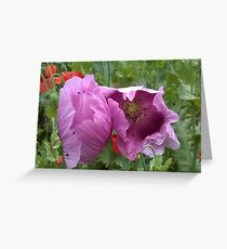 Lovely Lilac Flowers Greeting Card