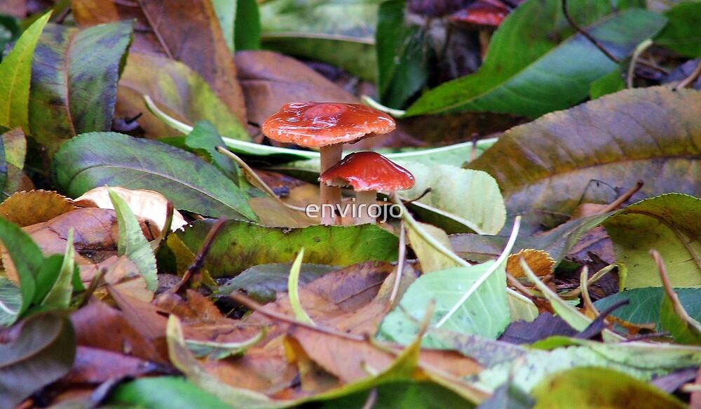 Little Toadstools by envirojo