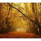 Autumn in Ferny Creek by Aaron .