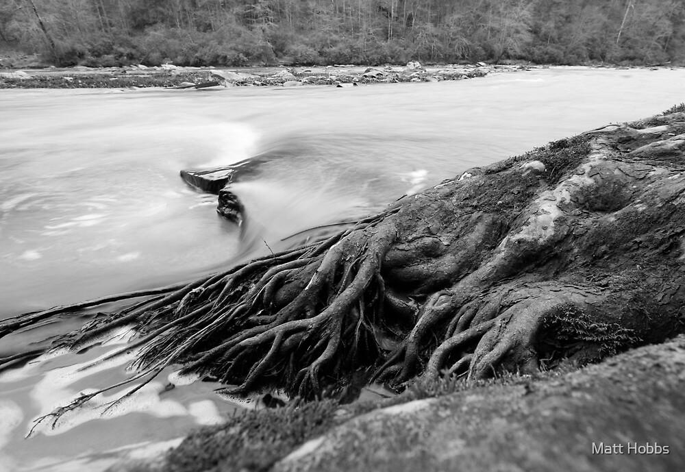 The Root of Evil by Matt Hobbs