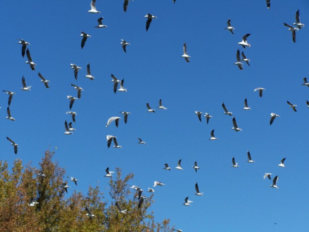 flock of seagulls by Princessbren2006