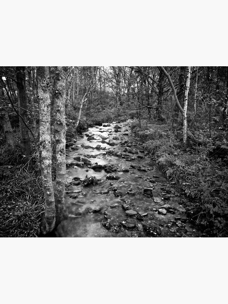 Woodland Stream by robcole
