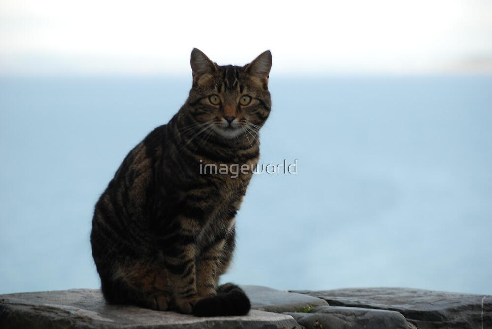 village cat by imageworld