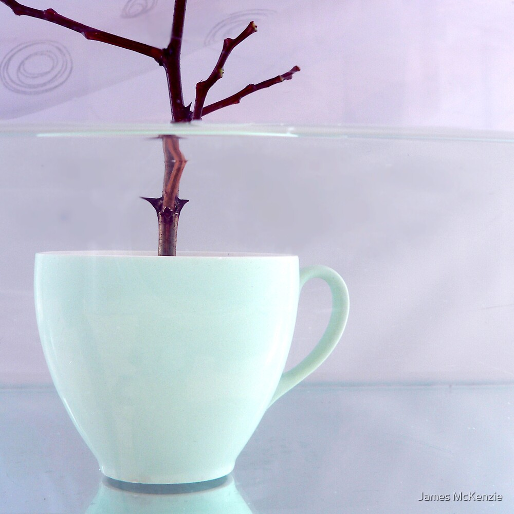 Tree Cup by James McKenzie