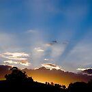 Sunshine by Joel McDonald