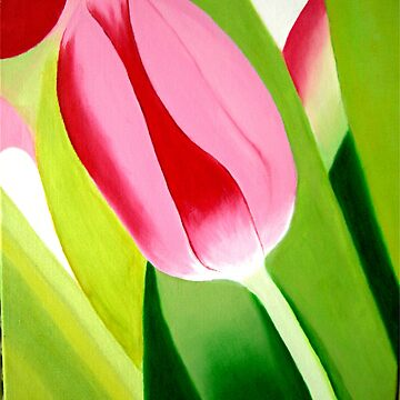 THE PINK TULIP by juliecat