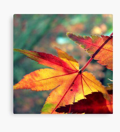 Softly Fall II Canvas Print