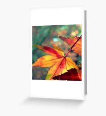 Softly Fall II Greeting Card