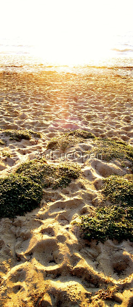 Sand Garden - Beach Panels series by 3rdEyeOpen