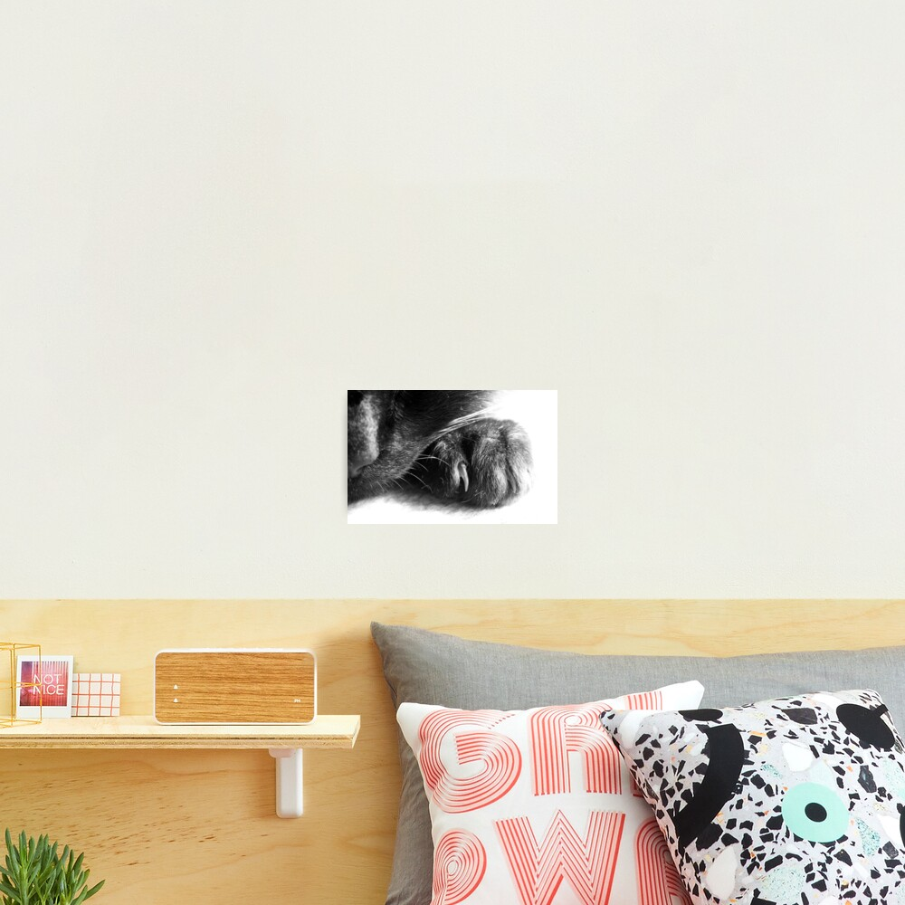 Paw Photographic Print