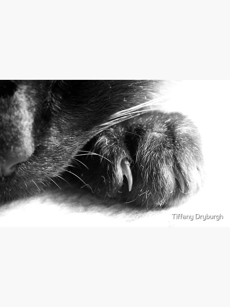 Paw by Tiffany