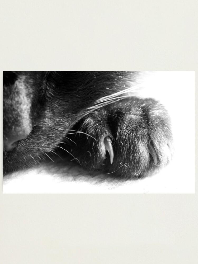 Alternate view of Paw Photographic Print