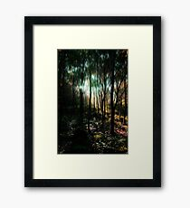 Trees in an Enchanted Forest Framed Print