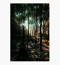 Trees in an Enchanted Forest Photographic Print