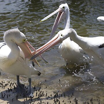 Pelican Fight by jagphoto