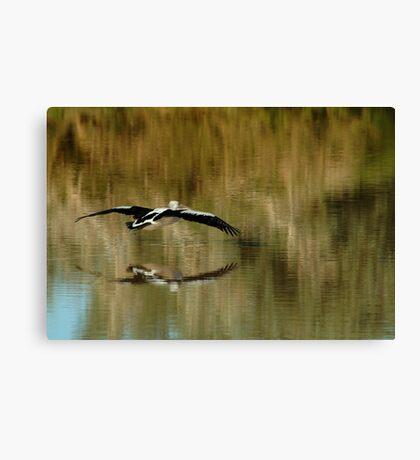 Pelican,Diamantina River, Outback Queensland Canvas Print