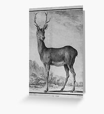 Vintage Dear Posters And Gifts - Retro Animal Collection Greeting Card