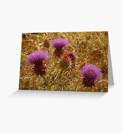 Purple Thistle,Geelong District Greeting Card