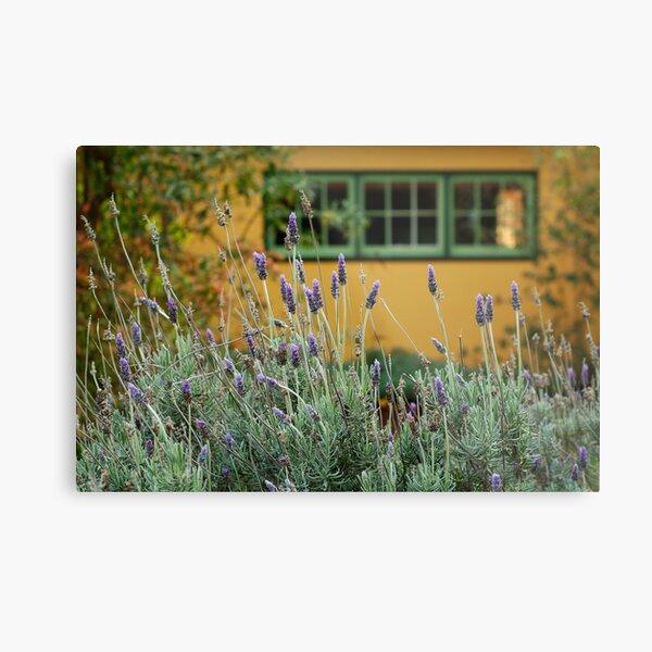 Lavender Cottage Metal Print