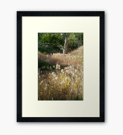 Grasses, Waurn Ponds Creek Bed Framed Print