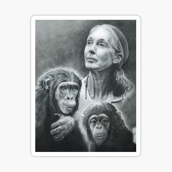 WE ARE FAMILY  JANE GOODALL Sticker