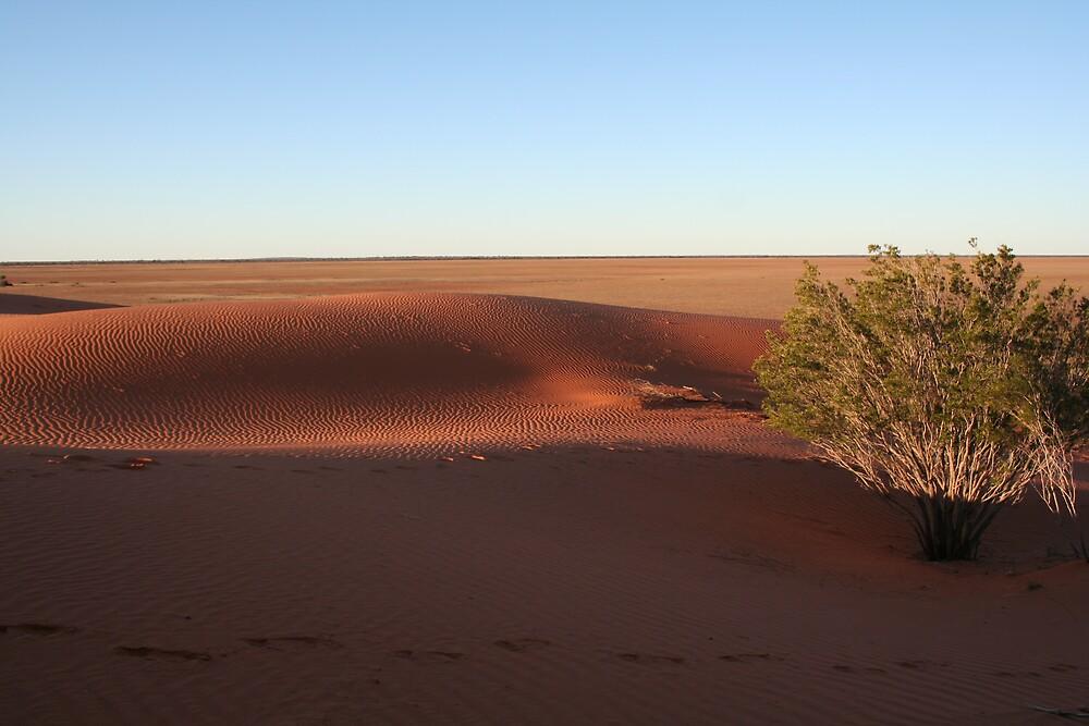 Desert #3 by Dhutchy