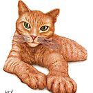 Orange Tabby by Lars Furtwaengler