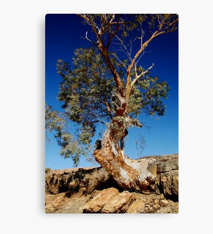 Channel Country,Outback Queensland. Canvas Print