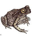 Toad by Lars Furtwaengler