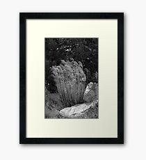 Tall Grass Framed Print