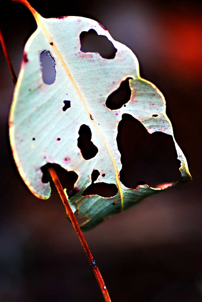 Leaf by Colleen Roberts