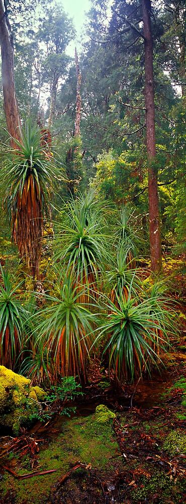 Pandanus - Pine Valley - Tasmania by James Pierce