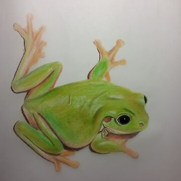 Green Frog by termite