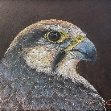 Lanner Falcon by termite