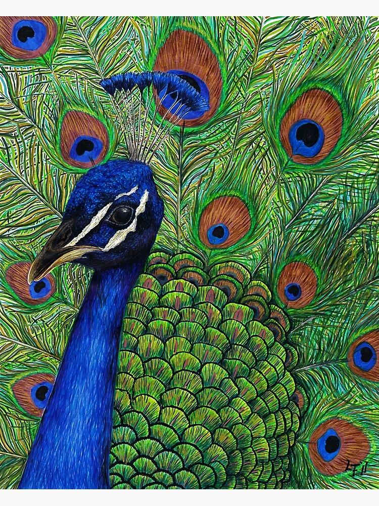 Peacock by LFurtwaengler