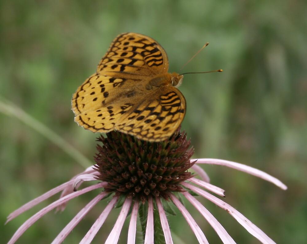 Butterfly on flower # 2 by wayne6043