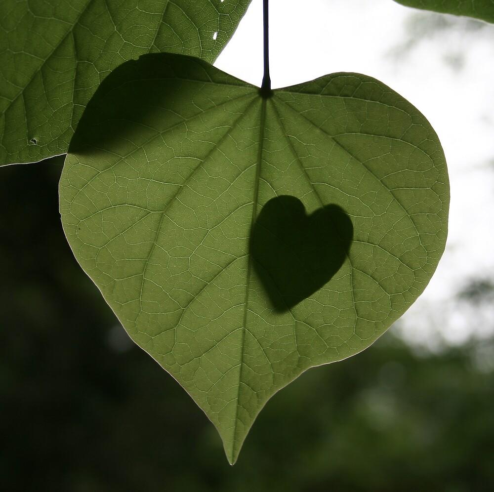 Hearts by wayne6043