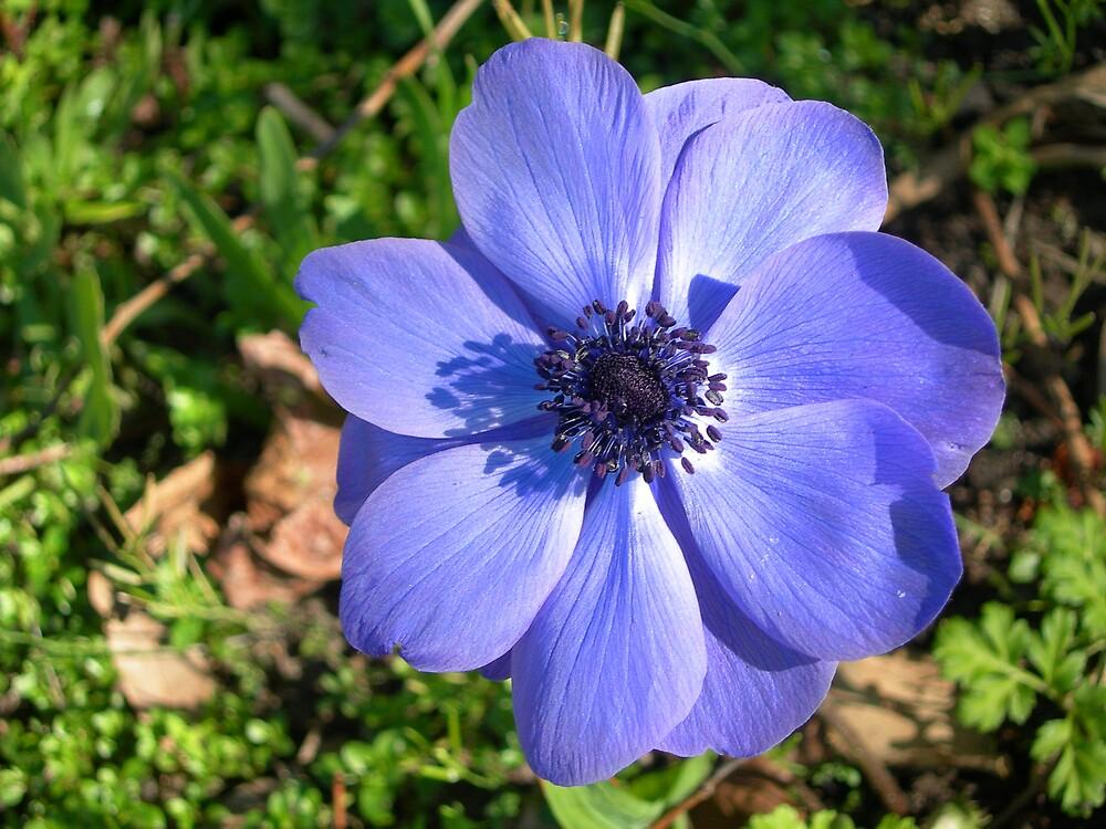Brilliant Blue by suzichendesign